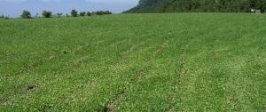 米子硫黄鉱山跡